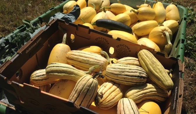 Harvest Time 2015