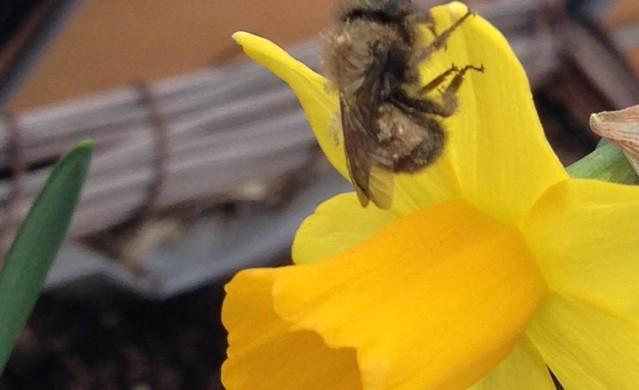 Mason Bees!